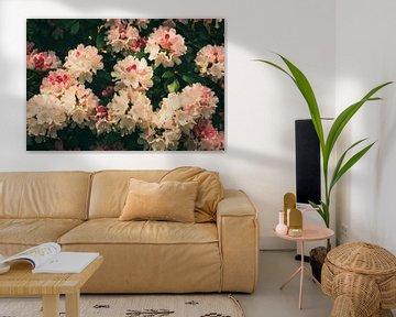 Dreamland (Rododendron) van André Scherpenberg