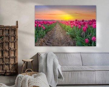 Tulpenveld Egmond