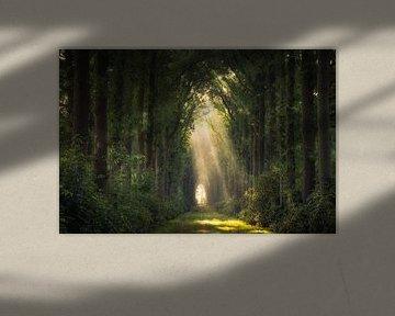 Magie in het bos