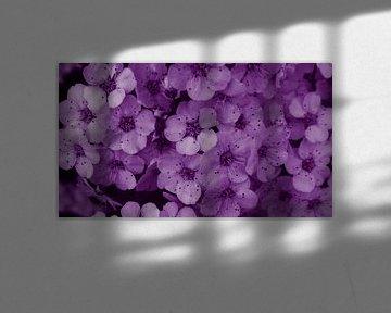Blüten violett Strauch von Jenny Heß