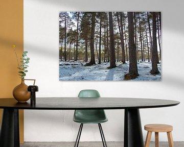 Winterbos, sneeuw tussen de bomen, boslandschap