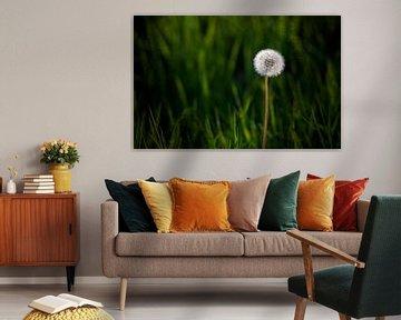Paardenbloem met groene achtergrond....... van Wim Schuurmans