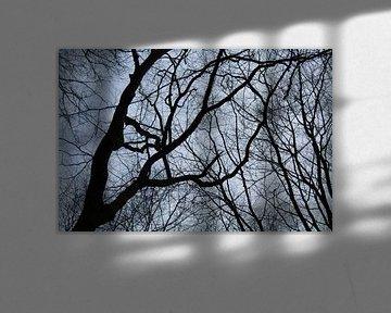 Takken tegen de lucht van MaSlieFotografie