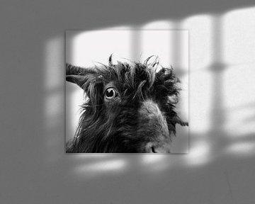 Charly the goat von Dorit Fuhg