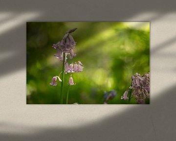Bloem in het bos op Terschelling von Leon Doorn