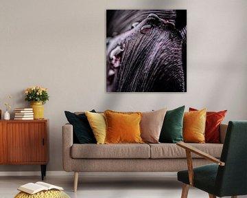 Regentropfen auf einer schwarzen Tulpe von MirjamCornelissen - Fotografie