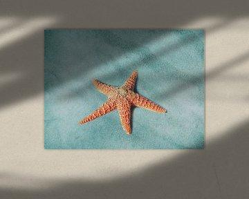 Starfish sur Jacky