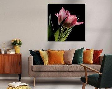 Roze tulp von MirjamCornelissen - Fotografie