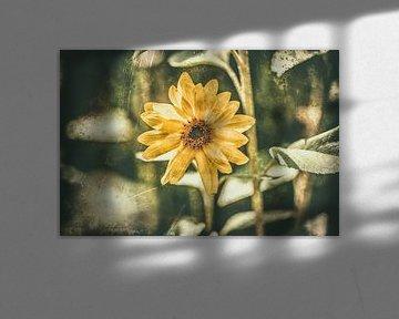 Sunflower Retro von William Klerx