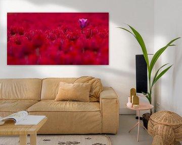 een paarse tulp in een veld vol rood wonderschoon von Bianca Fortuin