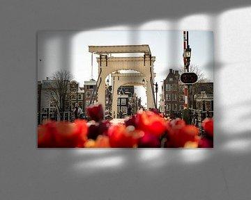 Magere Tulpen von Okko Meijer
