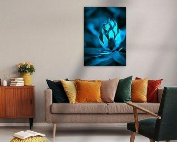 Nachtblauw Rhododendron von Sran Vld Fotografie