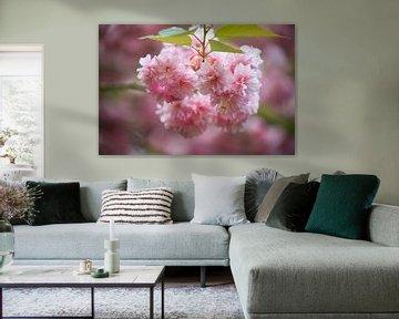 roze bloem von marijke servaes