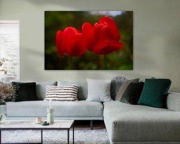 Rode Tulpen von Richard de Boorder