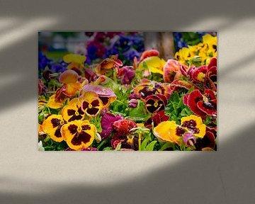 Bunte Blumen aus nächster Nähe von John Ozguc
