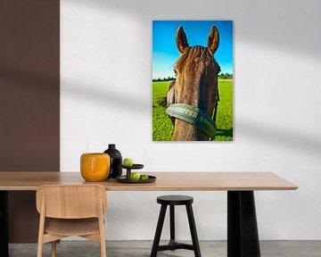 Pferd (2) von Norbert Sülzner
