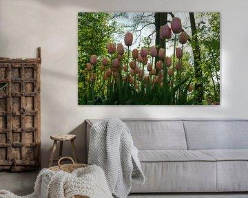 Tulpen in den Niederlanden von Carola van Rooy