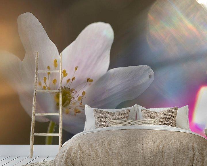 Sfeerimpressie behang: Bosanemoon in zonlicht van Arjen Hartog