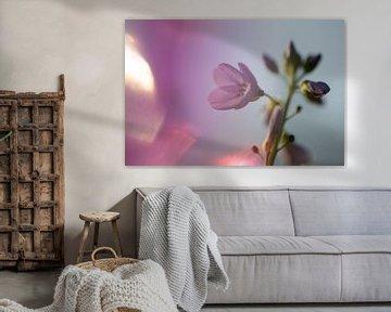 Pinksterbloem van Arjen Hartog