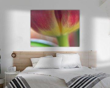 close-up rood gele tulp met steel von Bianca Muntinga