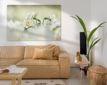 Keukenhof bloemen Wit 3 von Antine van der Zijden