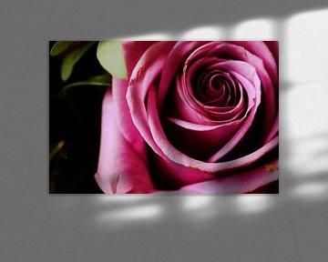 Paarse roos von Vicky De wilde