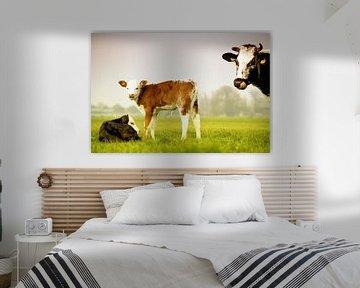 Koe en kalf van ZEVNOV .