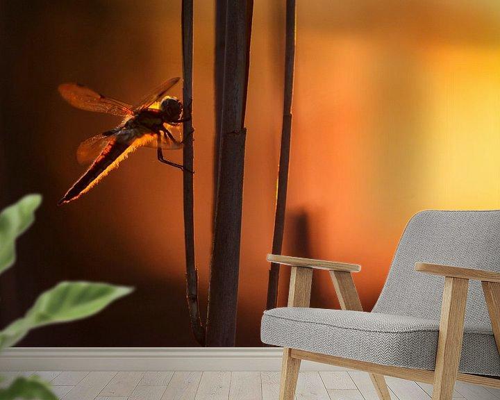 Sfeerimpressie behang: Libelle van Pim Leijen