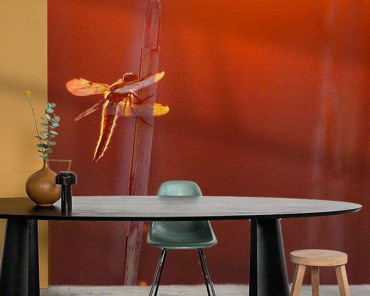 Beispiel fototapete: Dragonfly von Pim Leijen