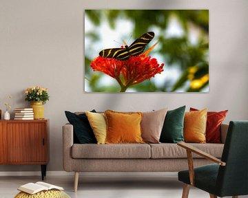 Vlinder op bloem von F Blouw