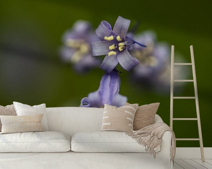 Sfeerimpressie behang: a close-up of a blue wood hyacinth van Koen Ceusters