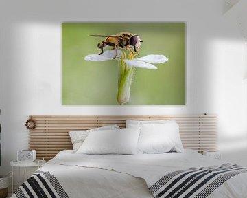 Zweefvlieg op bloem sur Evelyne Renske