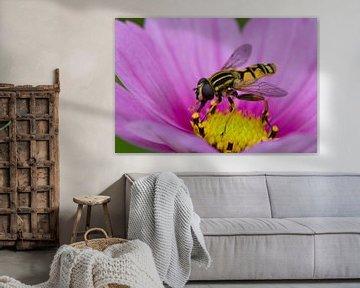 Zweefvlieg op roze bloem sur Evelyne Renske
