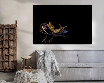 Luie slak in bad met reflectie (weerspiegeling) natuurfotografie