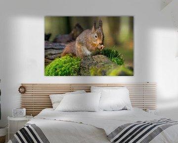 Op een nootje knabbelende eekhoorn