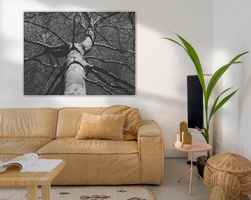 Een mooie boom van Yvonne Koppers