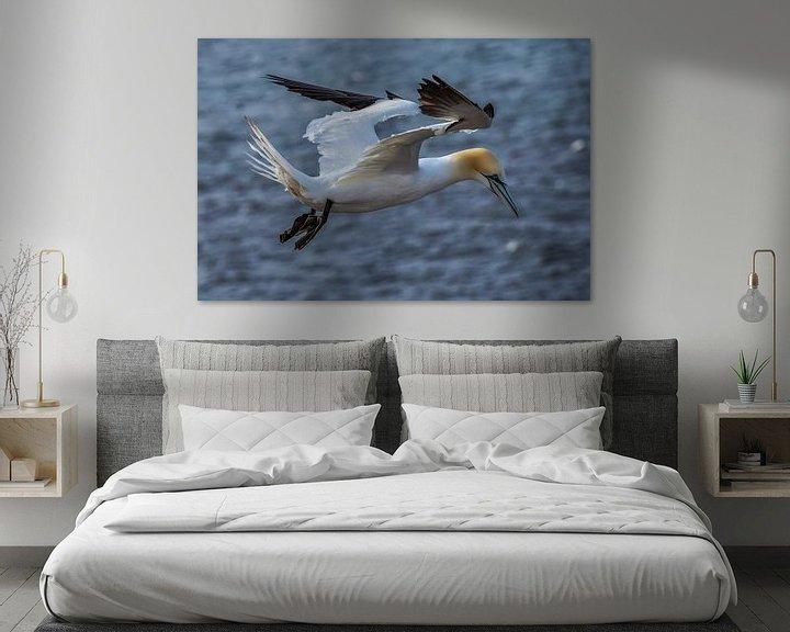 Beispiel: Fliegender Basstölpel (Morus bassanus) von Leo Luijten