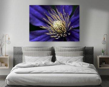 Clematis Blume von MSP Canvas
