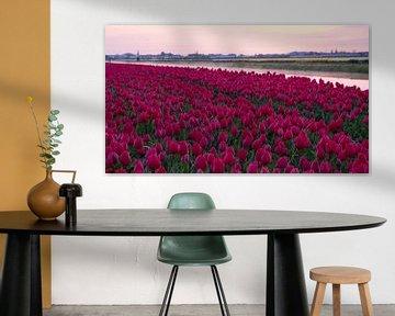 Bloeiend tulpenveld bij zonsopkomst in omgeving Lisse von Anna Krasnopeeva
