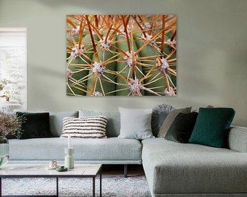 Cactus van MSP Canvas