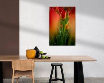 kleurrijke tulp midden in een veld