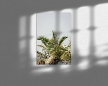 Speelse palm bladeren
