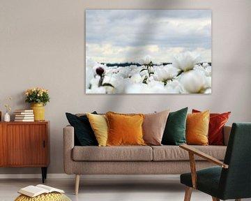 Witte pioenroos von Aafke's fotografie