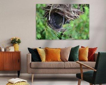 Jong vogeltje in het nest  von Aafke's fotografie