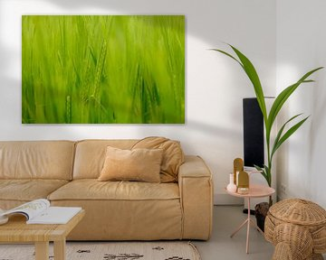 Grün von Arjen Roos