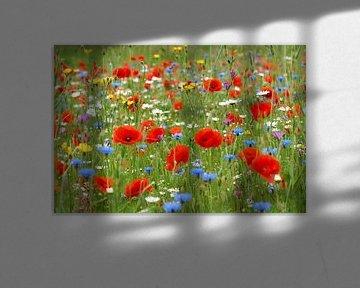 Garten der wilden Blumen von Ad Jekel