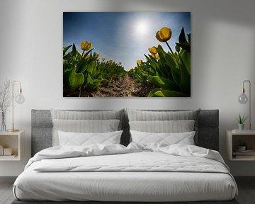 Bollenveld - Gele Tulpen von Manuel Speksnijder