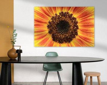 Gelbe rote Blume von MSP Canvas