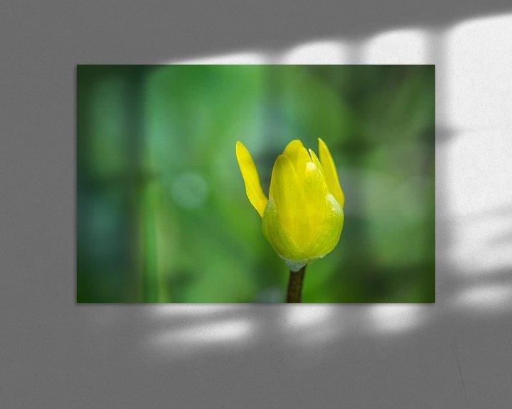 Sfeerimpressie: Boterbloem in knop van Leo Luijten