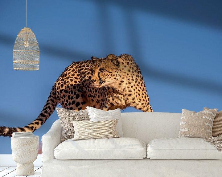 Sfeerimpressie behang: Cheetah van Bart Vodderie